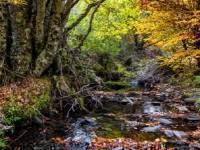 Senderismo Parque Natural Hayedo de Tejera Negra